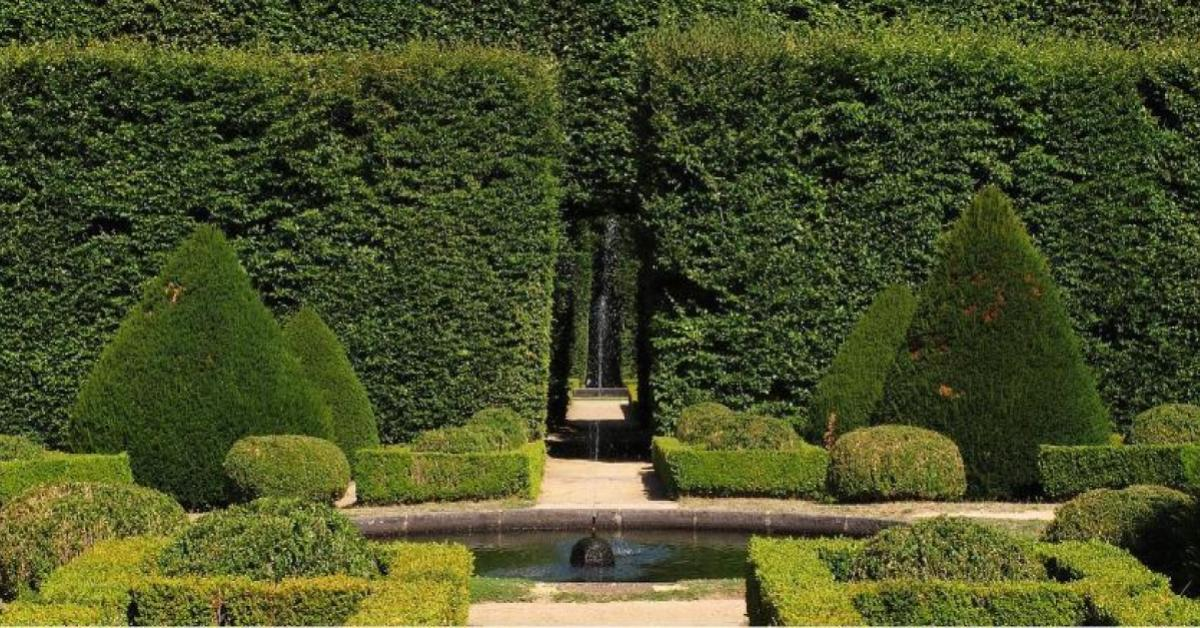 Maintaining Garden Hedges All You Need To Know Uk Lifestyle Buzz