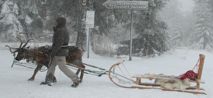 Fun and Festive Places to Visit Reindeer