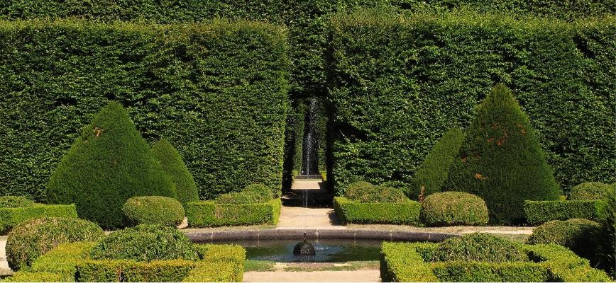 Maintainting garden hedges